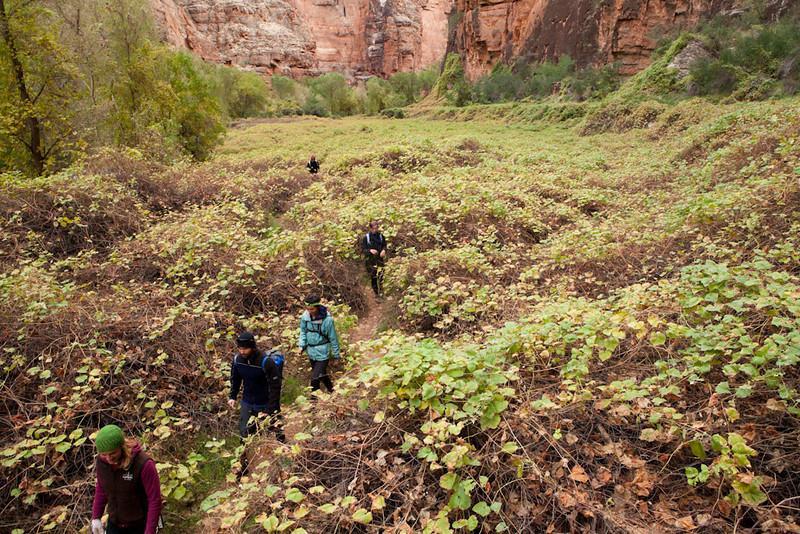 Grand Canyon October-0507.jpg
