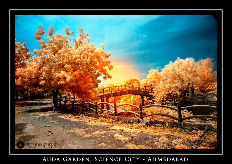 AUDA Garden IR-19.jpg