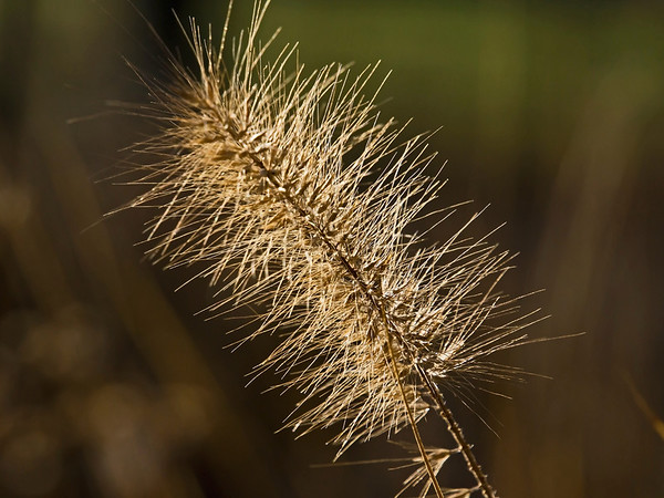 Dried Seeds Blooms and Grasses in Fall and Winter