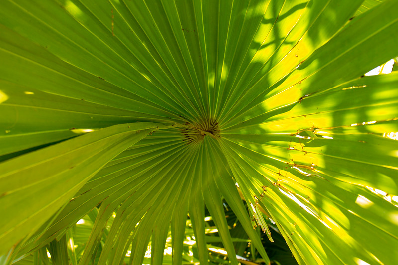 naples_botanical_garden_0019-LR.jpg
