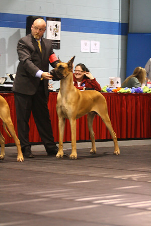 15-18 Mo Dogs