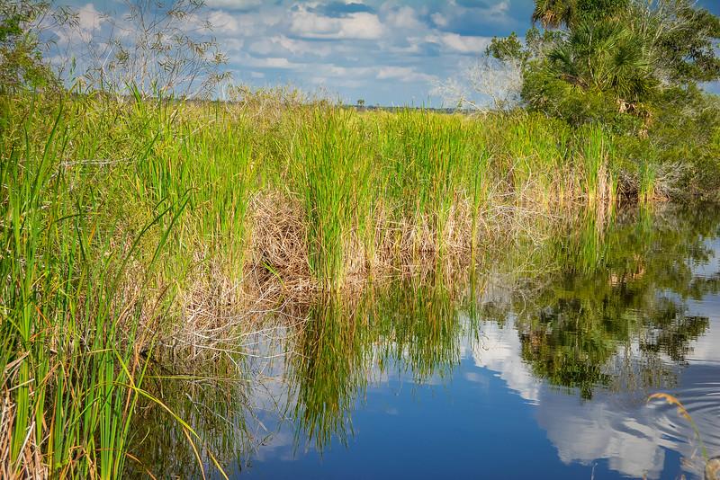 Everglades-41.jpg