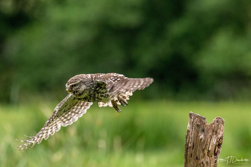 The Little Owl Shoot-6600.jpg