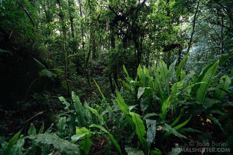 Mantiqueira southeastern atlantic forest
