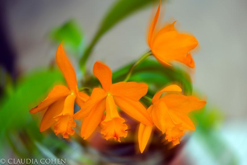 orangeflowersinapot.jpg