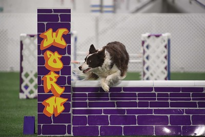 WHT Terrier/York DTC AKC Agility Trial March 30-April 1