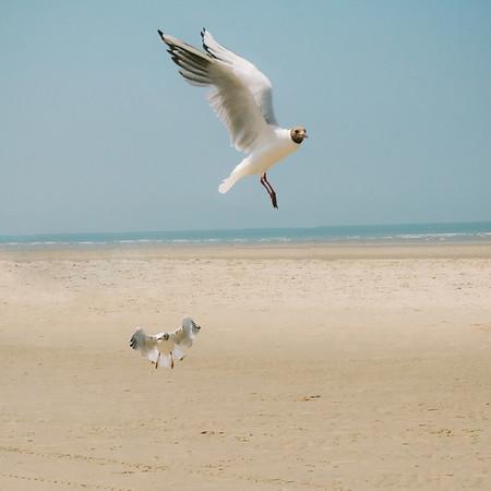 From Min - Biển Bắc