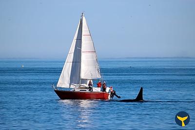 Victoria Sailing Co-op