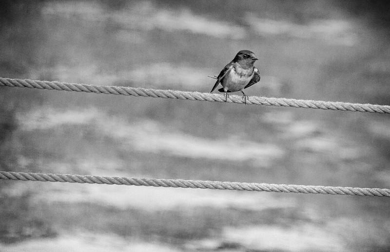 Bird on a wire 2.JPG