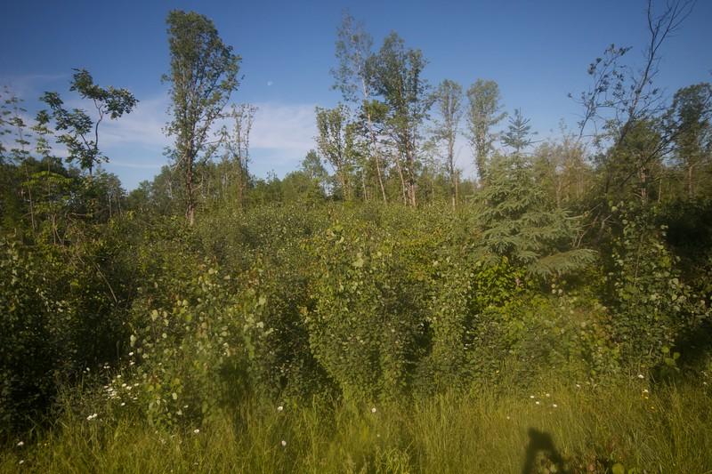 Golden-winged Warbler habitat CR103 Carlton Co MN IMG_2423.jpg