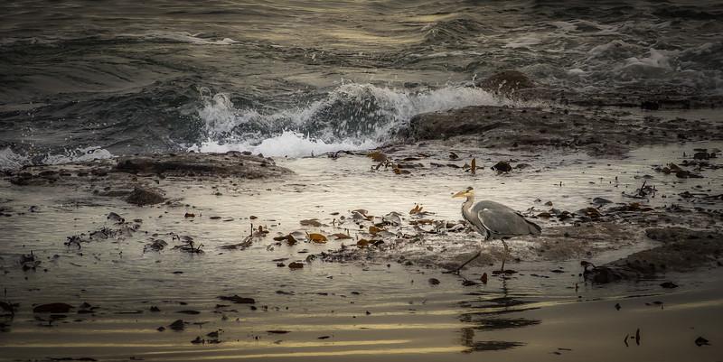 Browns Bay@Whitley Bay-080.jpg