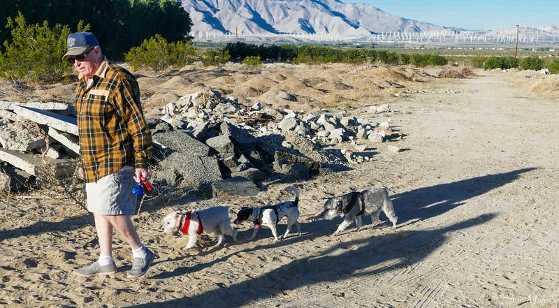 dog walk in the desert (13 of 13).jpg