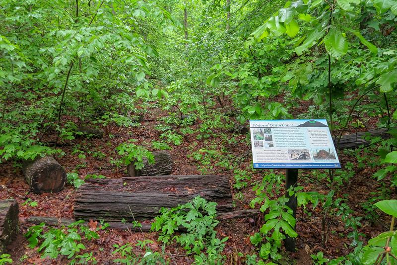 Lower Sidehill Trail -- 2,320'