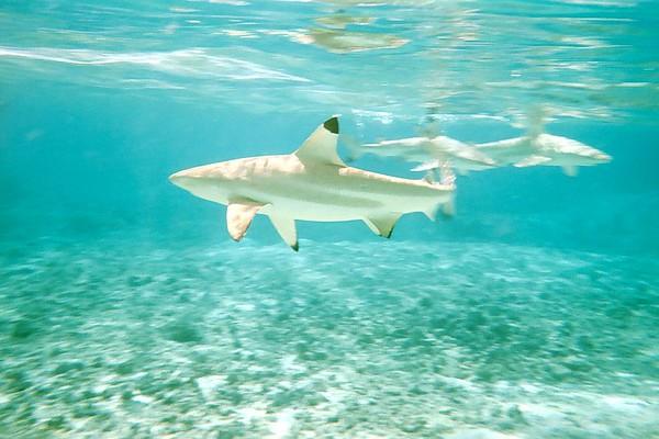 Rangi Underwater
