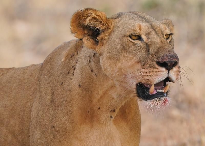 safari-2018-46.jpg