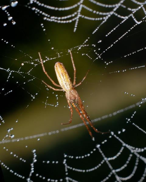 Spider SC6482.jpg