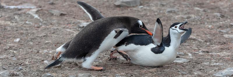 2019_01_Antarktis_01166.jpg