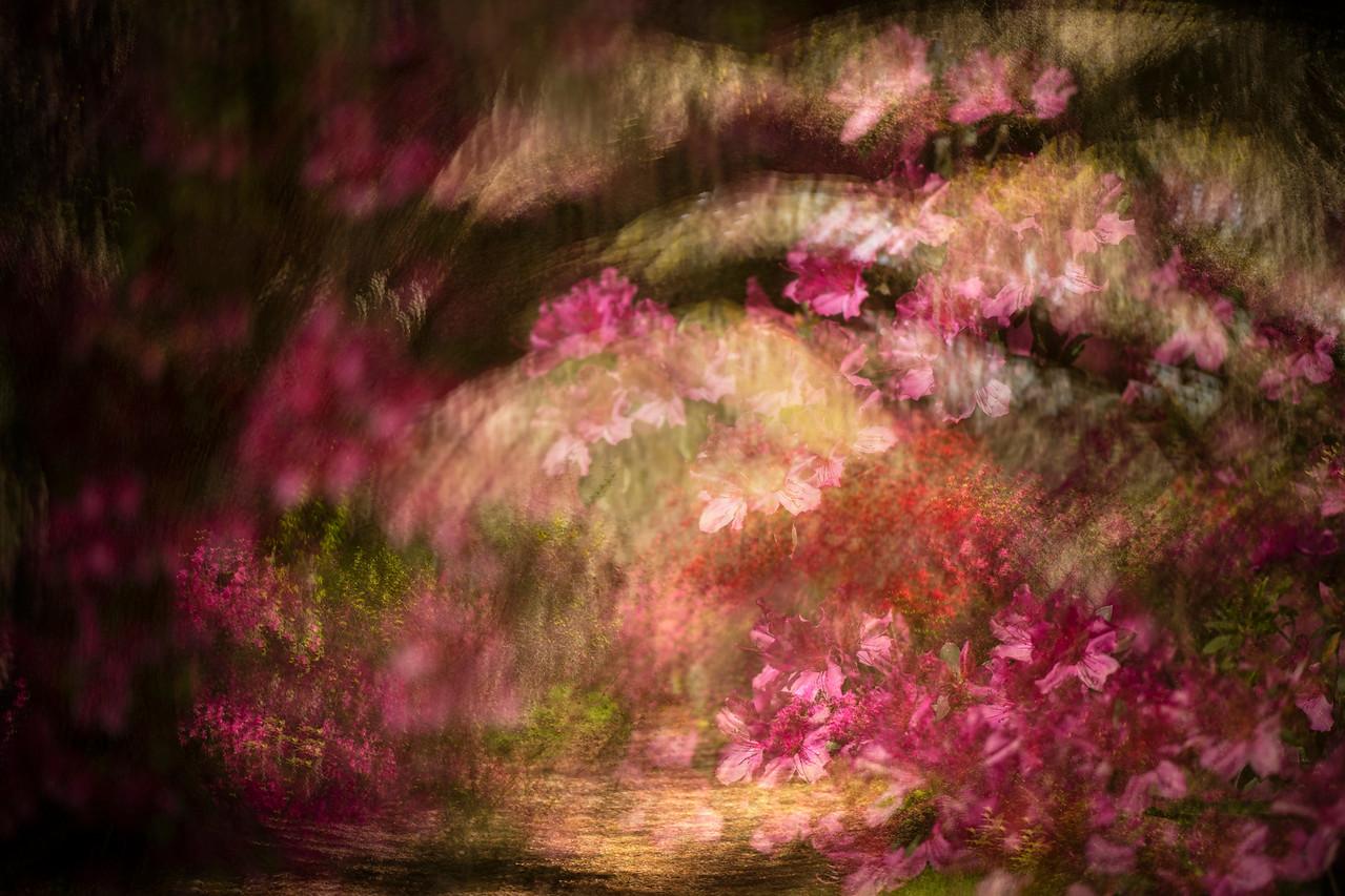 Dreaming of Magnolia