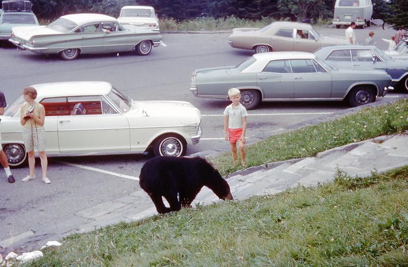 1966 - Bear in Smokies 3.jpg