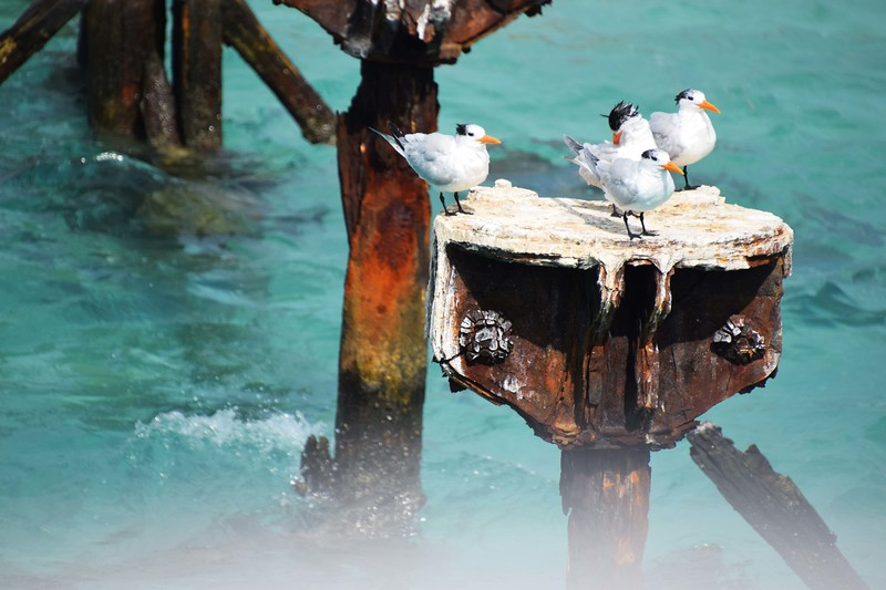 White seabirds on a post