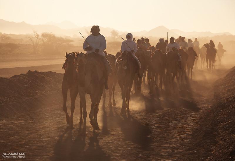 IMG_1152- Camel Race.jpg