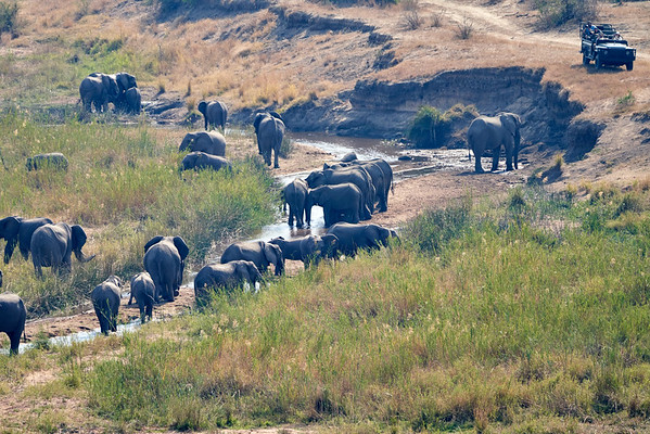 Elephants In River MalaMala South Africa 2019