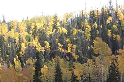 Canon: 2013-09-22: 02 Cedar Breaks