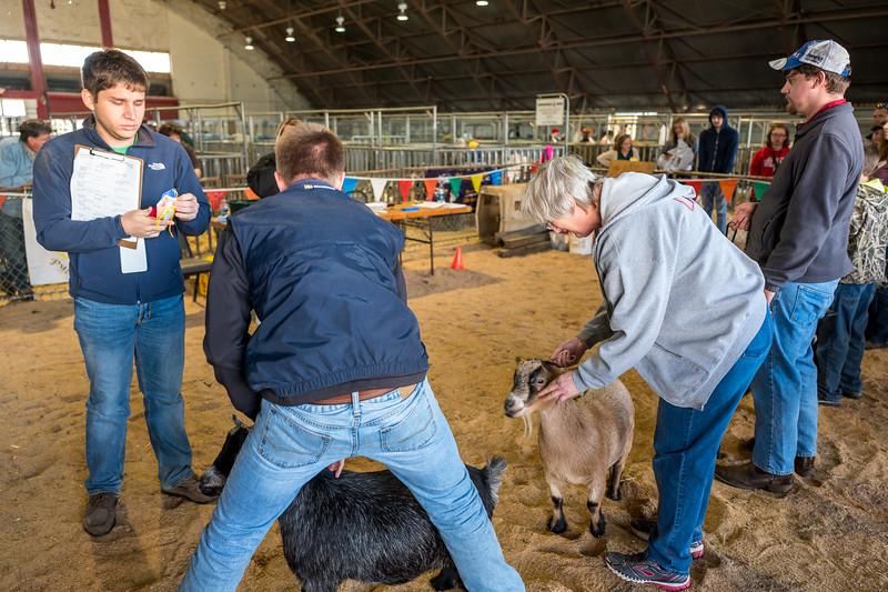 Goats at NC State Fair 2016