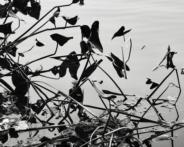 arrowheads, Belmont Lake State Park