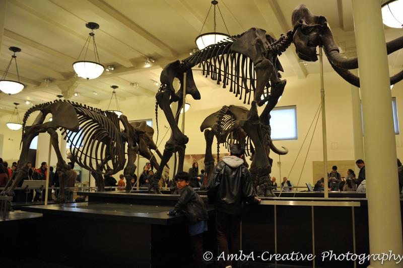 2013-12-30_AMNHMuseum@NewYorkNY_57.jpg