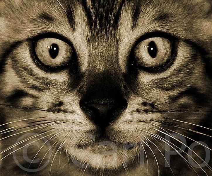 Bengal felines close up.jpg