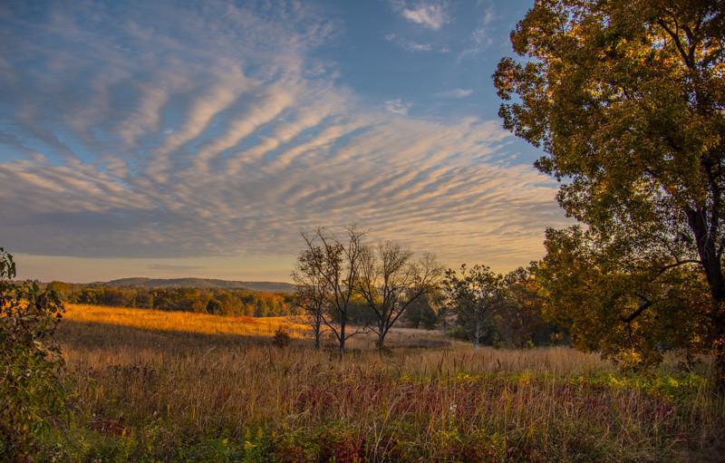 Autumn Field 11