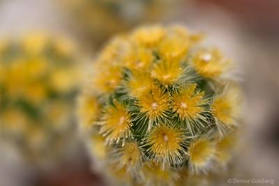Shapes, cactus