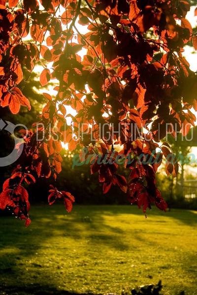 Morning Dew_batch_batch.jpg