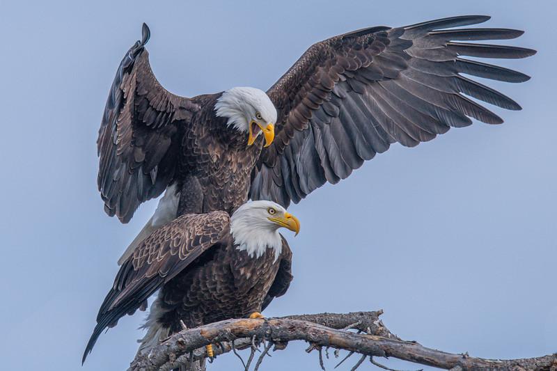 20200215Home Eagles 2-15-20DSC_1551.jpg