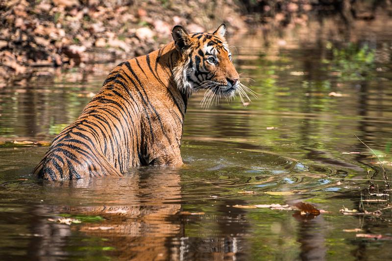 India_April_2019-1109.jpg