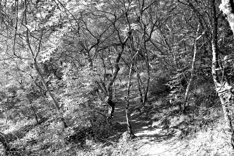 path 1-11-2013.jpg