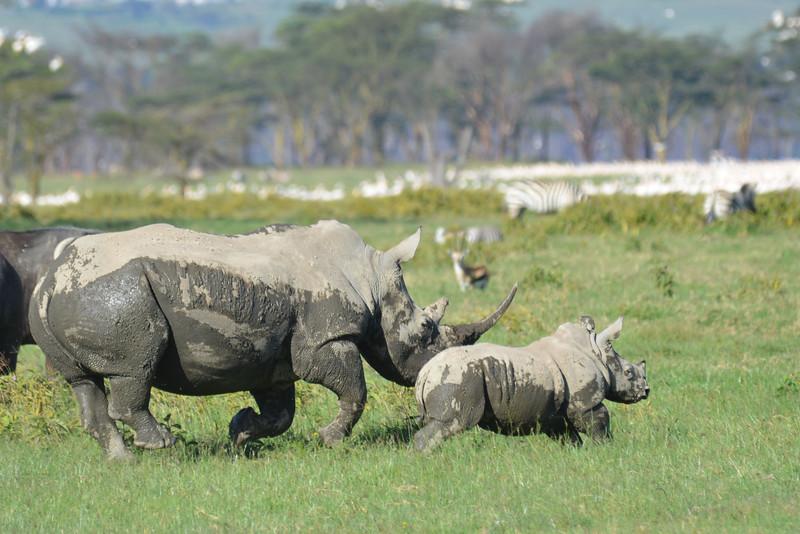 East Africa Safari 113.jpg