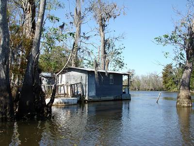 Honey Island Swamp Oct 2008