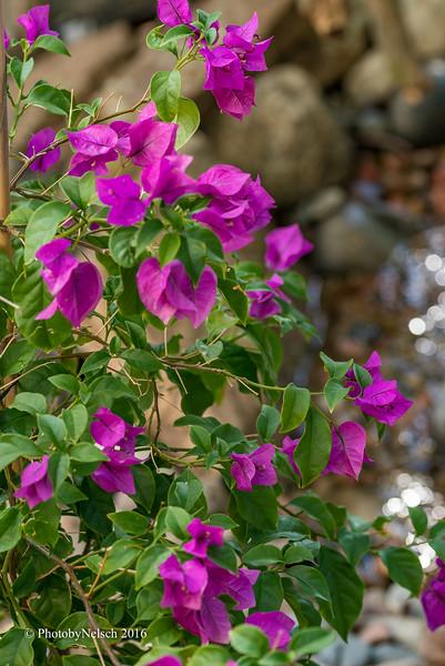 Don Egan's Flowers -141.jpg