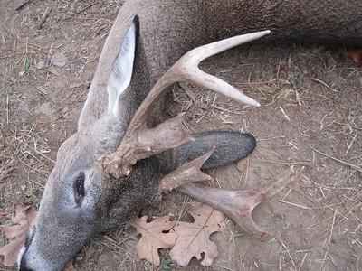 Deer Season 2010