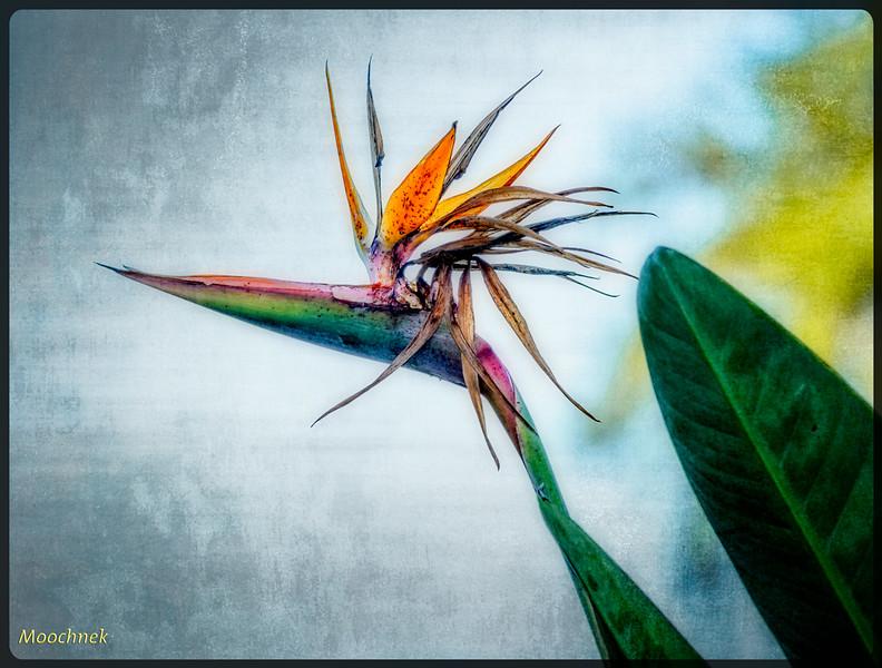 Artistic Bird Of Paradise