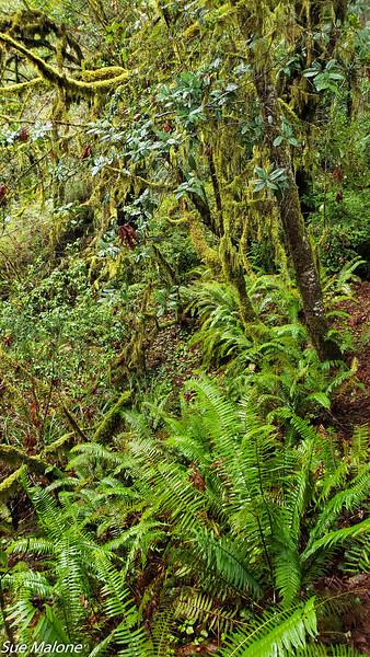 02-13-2021 Part 2 Prairie Creek Redwood State Park-11.jpg