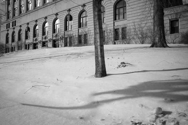 Shadows on City Hall Lawn