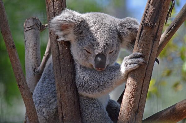 Lowry Park Zoo Animals Australia
