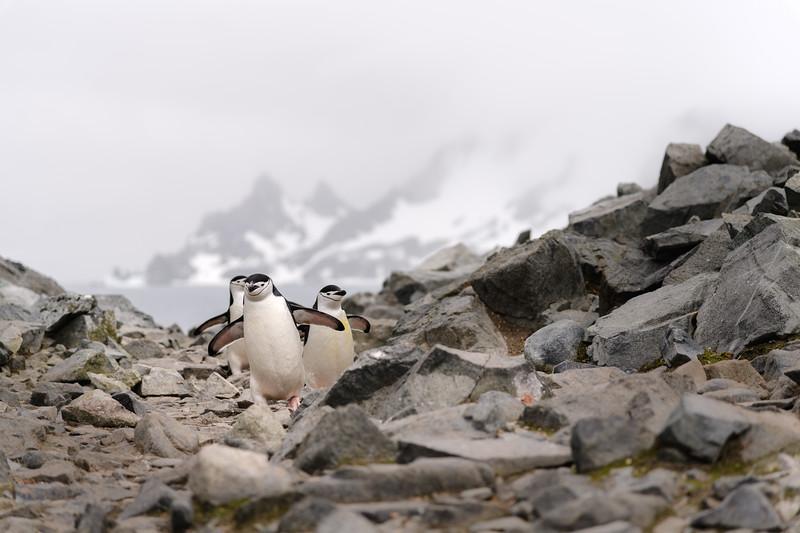 Antarctica-1422.jpg