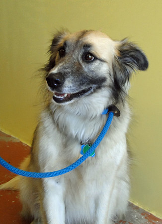Maverick - 10/10 ADOPTED!