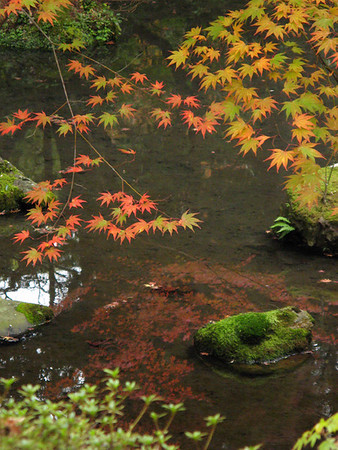 "Saiho-ji ""Moss Garden"""