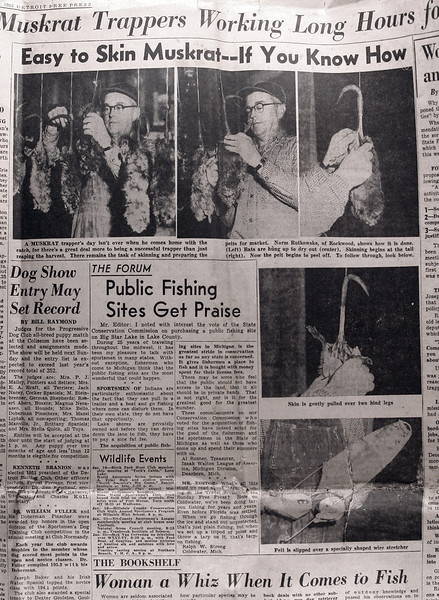 Uncle Norm in the Detroit News on Skinning Muskrats 1-18-1953-X3.jpg