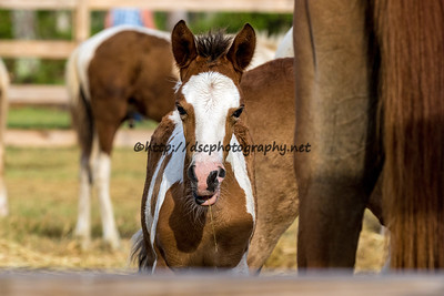 May's Filly